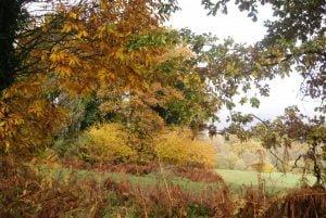 Fête de l'automne, autour de la pomme et des arbres